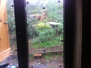 There really is one chaffinch enjoying some sunflower seeds in the rain.