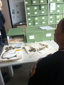 Plant studies in the Plant Library; The Herbarium at Kew Gardens.