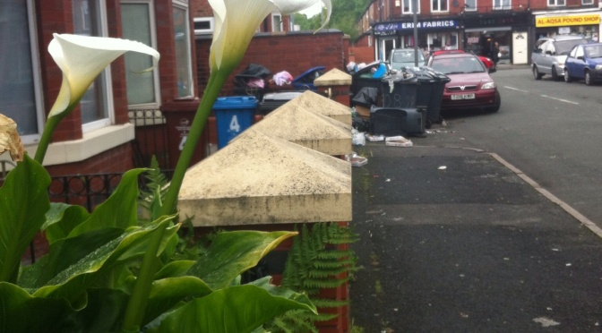 Consider the lilies:  Consider the bins!  A walk through the mean streets of Manchester!