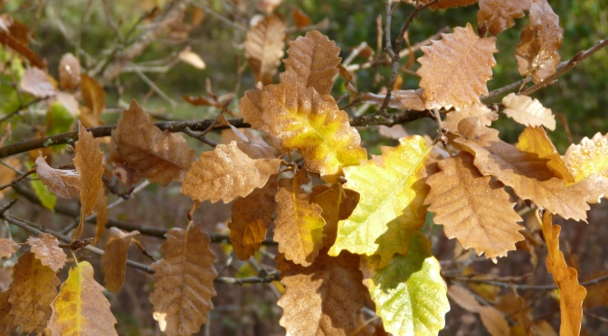 January 2015:Signs of Spring and Autumn in Winter Back at Finca Navasola