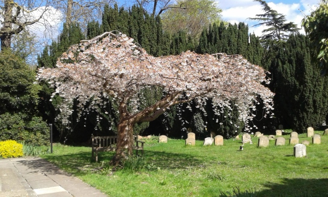 Spring, Weddings, Blessings and Blossom