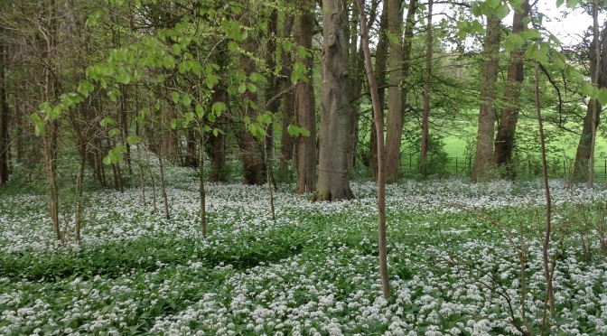 Oh to be in England: Yorkshire Wolds and Ways. Botany and Barn Owls.