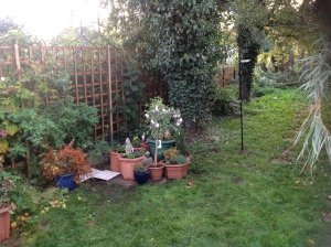 Garden and apple tree in London