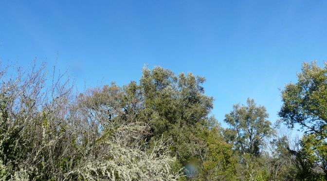 A poem for the birds at Navasola.