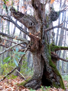 Young pines tall and straight Old arms embrace with kali Hug the earth with wood