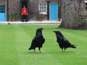 bl 1London_tower_ravens