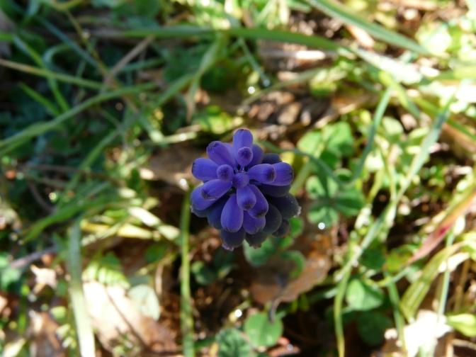 Botany and Birds: Early to mid Spring at Navasola.