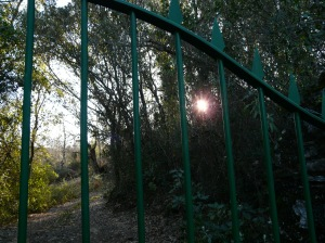 early morning sun by the entrance to Navasola