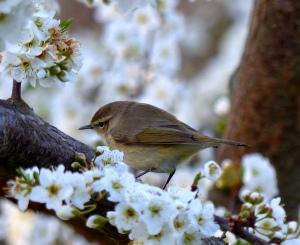 Warbler of some kind by Ruth Konigsberger