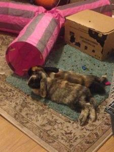 Bunny friends!