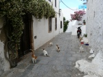Cats in Lindos
