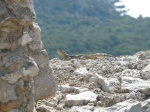 dragon lizard at Monolithos