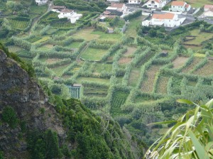 Individual vegetable plots with high hedges to protect plants from the sea salt and wind.