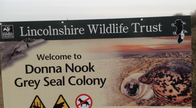 Wishing all the creatures of this world a successful 2017! Grey seal conservation success along Donna Nook in Lincolnshire, UK.