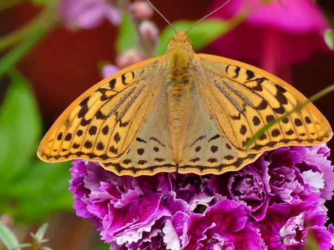 Gardens and Butterflies
