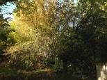 Hazel tree colours.