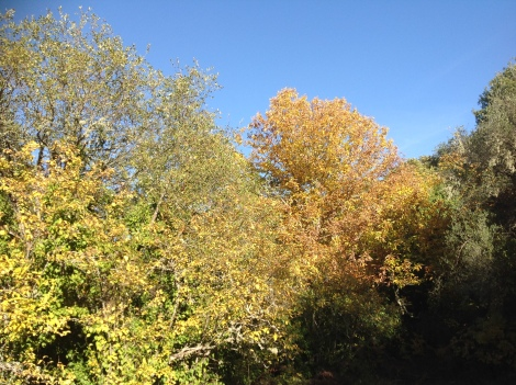 Autumn colours and Andalucian blue skies