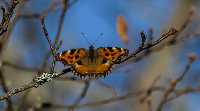 First February Butterfly and the need to deal with the New Green Deal.