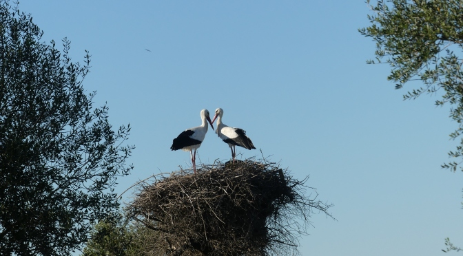 Decision Day for the Doñana Wetlands. A visit to see some of the birds.